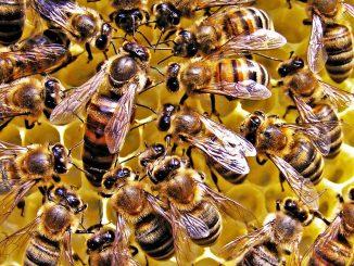bee-farming-news-photo