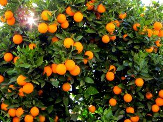 orange news photo