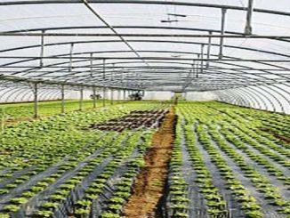 tunel farming